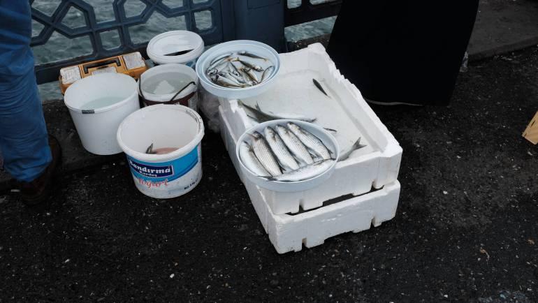 Hoeveel vis mag je meenemen na het vangen?
